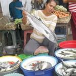 Harga Ikan Laut Melejit