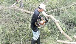Perhutani Tebangi Pohon Pinggir Jalan