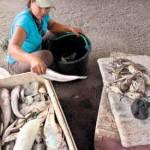 Hasil Tangkapan Ikan masih Sepi