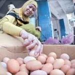 Harga Telur Naik Paling Banter