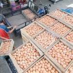 Telur-Beras Naik Tipis