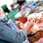 Daging Ayam Mulai Diobral