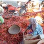 Cabai Rawit Naik, Cabai Merah Turun