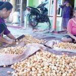 Pengepul Pinang di Desa Rejosari, Kecamatan Glagah