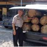 Illegal Loging Kembali Menggila
