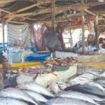 Harga Ikan Segar Mulai Naik