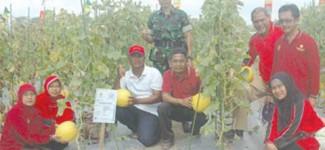 Kementerian Pertanian Bantu 5000 Bibit Jambu Krista